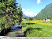 stock photo of south tyrol  - An idyllic valley with a creek and yellow flower meadows in South Tyrol - JPG