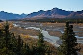 picture of denali national park  - Denali National Park - JPG