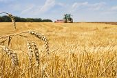 stock photo of tractor  - Last straws on stubble field after harvest and tractor plowing focus on ears of wheat - JPG