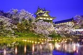 image of night-blooming  - Koriyama Castle in Nara - JPG