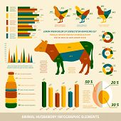 picture of animal husbandry  - Animal husbandry infographics flat design elements of livestock and chickens vector illustration - JPG