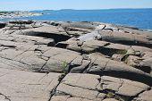 picture of sea-scape  - Baltic Sea coast line in Western Finland  - JPG