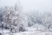 stock photo of sleet  - The Christmas mysterious winter snowy forest in a fog Russia - JPG