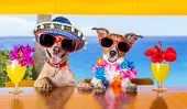 stock photo of hot dog  - two funny dogs drinking cocktails at the bar in a beach club party with ocean view - JPG