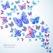 foto of summer insects  - Blue watercolor butterflies - JPG