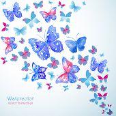 foto of blue butterfly  - Blue watercolor butterflies - JPG
