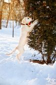 foto of golden retriever puppy  - Winter walk at snowing park of golden retriever puppy - JPG