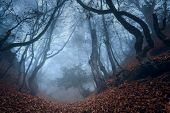 stock photo of crimea  - Fog in the Forest - JPG
