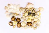 pic of beads  - Various objects like varied shaped sea shells - JPG