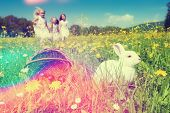 stock photo of easter eggs bunny  - Children on an Easter Egg hunt on a meadow in spring - JPG