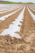 image of cultivation  - cultivation with plastic on ground in a landscape of Spain - JPG