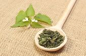 pic of nettle  - Heap of dried nettle on wooden spoon and fresh stinging nettle with white flower lying on jute canvas - JPG