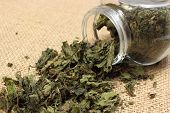 stock photo of nettle  - Closeup of dried nettle dried nettle pouring out of glass jar on jute canvas - JPG