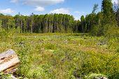 foto of deforestation  - Woods logging  stump after deforestation hack woods - JPG