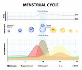 picture of ovary  - Menstrual cycle - JPG