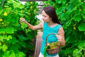 pic of greenery  - young woman holding a basket of greenery and onion in greenhouse - JPG