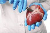 pic of scalpel  - Doctor holding heart organ and scalpel close up - JPG