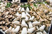 image of stall  - Mushrooms for sale at market stall in La Boqueria Barcelona Spain - JPG