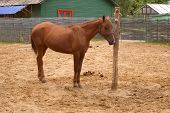 foto of bareback  - bareback horse relax after work - JPG