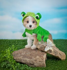 image of baby frog  - Cute Puppy dressed up in a frog outfit standing on rocks outside next to a butterfly - JPG