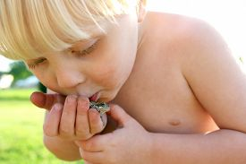 picture of cute frog  - A Dirty little toddler boy is playing outside and holding a Grey Tree frog in his hand kissing it - JPG