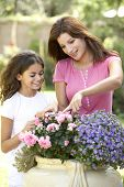 stock photo of mother daughter  - Mother And Daughter Gardening Together - JPG