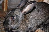 Cute Bunnie Rabbit poster