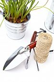 Gardening tools and houseplants - still life