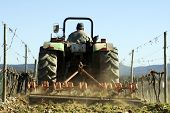stock photo of chug  - Farmer using a tractor ploughing a vineyard back view.
