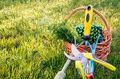 Two Hand Garden Trowels, Pruner, Gloves And Bouquet Of Field Chamomiles In Wicker Basket With Green  poster