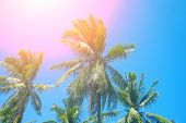 Paradise Landscape With Coco Palm Trees. Exotic Place View With Tropic Tree Silhouettes. Palm Tree F poster