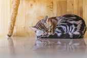 The Lazy Cat Is Sleeping Lazily In The House. poster