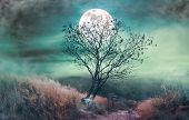Landscape Of Dark Night Sky With Clouds. Beautiful Bright Full Moon Above Wilderness Area In Forest. poster