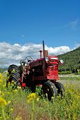 stock photo of farm land  - An old red farm tractor resting in a field surrounded by yellow flowers.