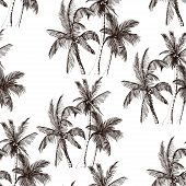 Seamless Pattern With Tropical Palm Trees. Sketchy Rainforest Isolated On White Background. Hand Dra poster