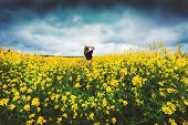 Happy Woman Rejoices Summer Walking On Meadow With Many Yellow Flowers. Young Lady Thinking About Li poster