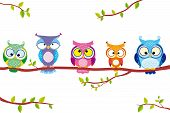 picture of owl eyes  - illustration of five different funny owls sitting on a branch - JPG
