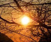 Bright Sunlight At Sunset Time Through Silhouette Of Tree Branches. Red And Yellow Colors Of Sundown poster