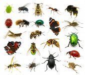 pic of hornets  - Set of insects on white background - JPG