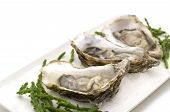 foto of mollusca  - raw opened oysters on a white background