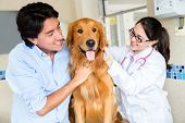 foto of vet  - Dog at the vet with his owner and the doctor - JPG