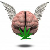 pic of mary jane  - Winged Brain with Marijuana Leaf - JPG