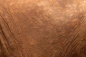 picture of maxim  - Detailed Close up of a rough Elephant skin - JPG