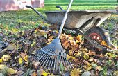 pic of wheelbarrow  - rake to collect leaves near an old wheelbarrow - JPG