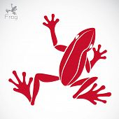 stock photo of webbed feet white  - Vector image of an frog on white background - JPG