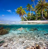 image of french polynesia  - Beautiful tropical island in French Polynesia under and above water - JPG