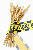 stock photo of wheat-free  - Caution tape wrapped around a bundle of wheat - JPG