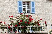 stock photo of anjou  - The romantic window with red roses flowers - JPG