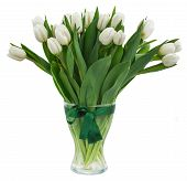 foto of bosoms  - bouquet of white  tulips in glass vase  isolated on white background - JPG