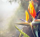 foto of jungle flowers  - Beautiful flower growing in tropical rain forest - JPG